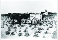 early farming in Woodbine